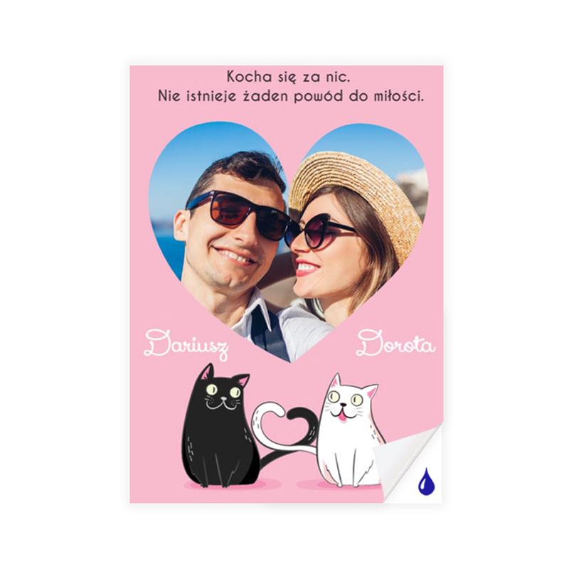 foto Plakat samoprzylepny ze zdjęciem zakochane kociaki A3